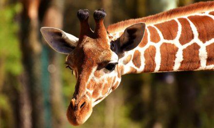 Sacramento Zoo at William Land Park
