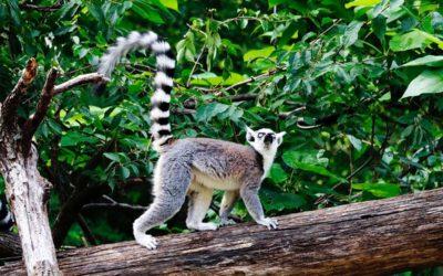 Cincinnati Zoo and Botanical Garden — The Second Oldest U.S. Zoo
